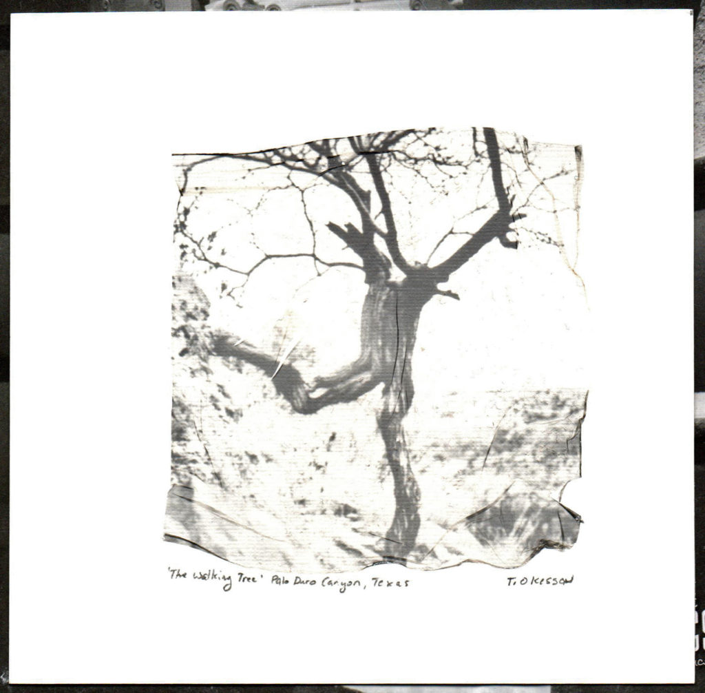 The Walking Tree, 2019.